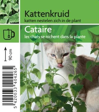 cataire
