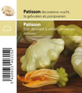 Patisson blanc pot 10.5